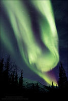 Aurora Borealis above spruce and mountain (vertical)